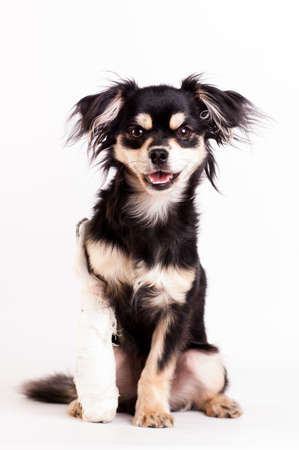 Cute little six month mixed breed dog on white background at studio Zdjęcie Seryjne