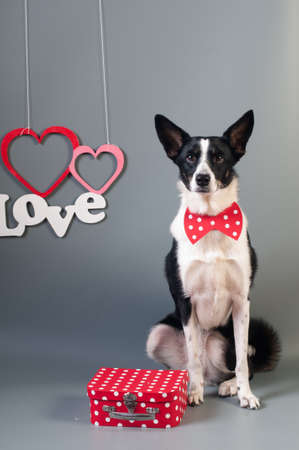 Good Valentine Bow Adorable Dog - 95394012-portrait-of-cute-mixed-breed-dog-in-bow-tie-and-text-love-with-two-hearts  HD_708275  .jpg?ver\u003d6