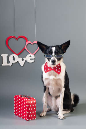 Wonderful Necktie Bow Adorable Dog - 95332265-portrait-of-cute-mixed-breed-dog-in-bow-tie-and-text-love-with-two-hearts  2018_568060  .jpg?ver\u003d6