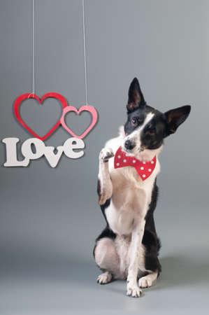 Portrait de mignon chien de race mixte en noeud papillon et texte amour avec deux coeurs Banque d'images - 95392732