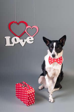 Portrait de mignon chien de race mixte en noeud papillon et texte amour avec deux coeurs Banque d'images - 95392736