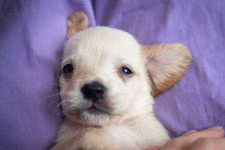cute little puppy Stock Photo