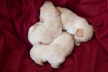 cute little puppies Stock Photo