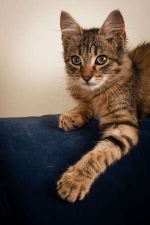 One Small three month kitten mixed breed