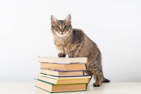 Cute little kitten with books on white background 免版税图像