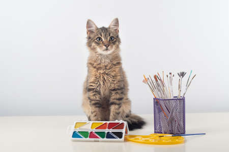 Little four month mixed breed kitten on white background with colorful paints and brushes Stock Photo