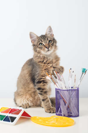 Little four month mixed breed kitten on white background choosing brush for painting