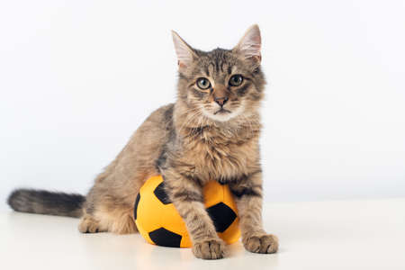 Little four month mixed breed kitten on white background with football ball