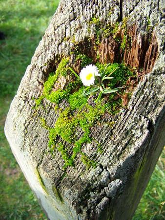 fencepost: Flower in Fencepost