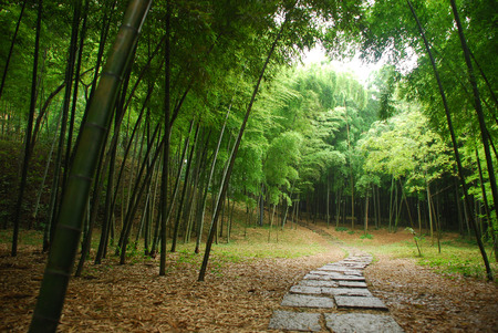 bamboo forest inside a mysterious mountain in China