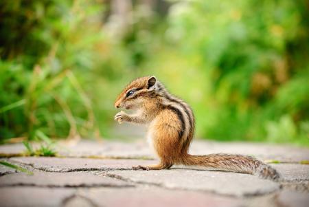 cute squirrel was eating peanut in park
