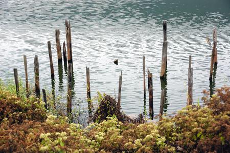 Lake edge with wood sticks Фото со стока