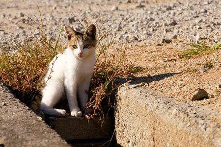 cat standing at outdoor