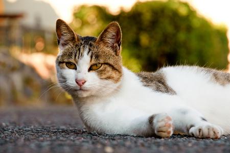 cute cat at Cat island, japan aoshima