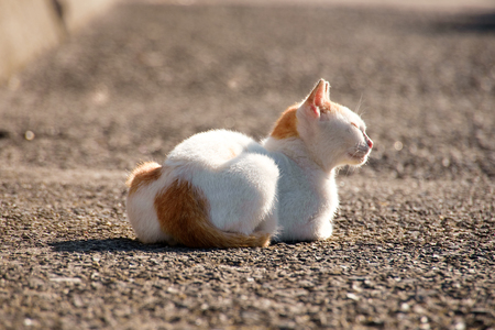 cat at outdoor