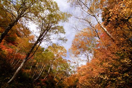 hiking path in hokkaido mountain in autumn, red leaves season Фото со стока