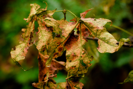 close up of withered leaves