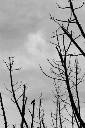 tree and crow silhouette against grey cloudy sky