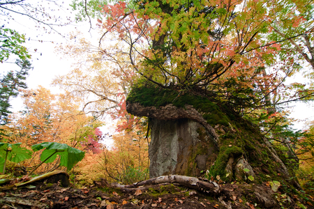 Big tree in red leaves mountain