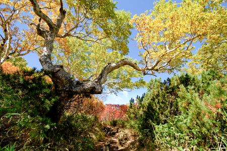 Hiking path in Hokkaido mountain in autumn, red leaves season