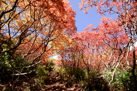 hiking path in hokkaido mountain in autumn, red leaves season Stock Photo