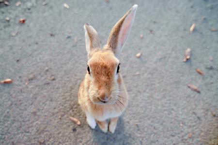 cute wild bunny rabbits in japans rabbit island, okunoshima