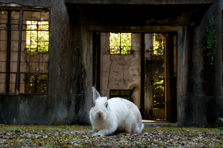 abandoned factory in japan's rabbit island, okunoshima