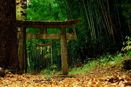 historical Torii in a forest in japan Editorial