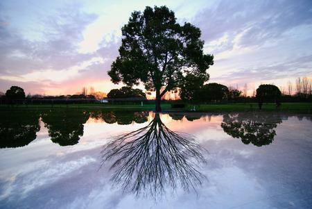 double exposure to create surreal tree section Фото со стока