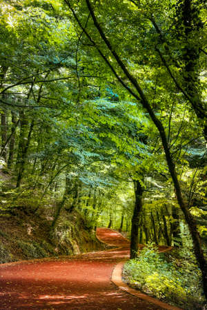 Road in the woods