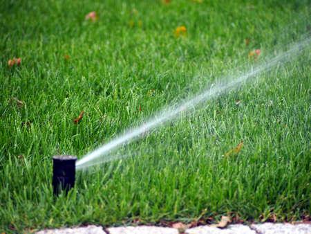 spring water: Garden irrigation - working sprinkler