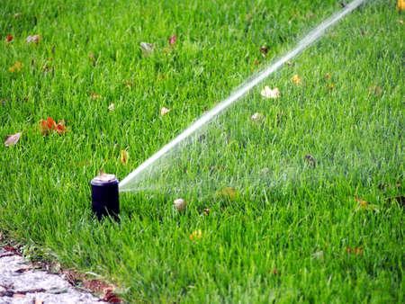 sprinkle system: Garden irrigation - working sprinkler