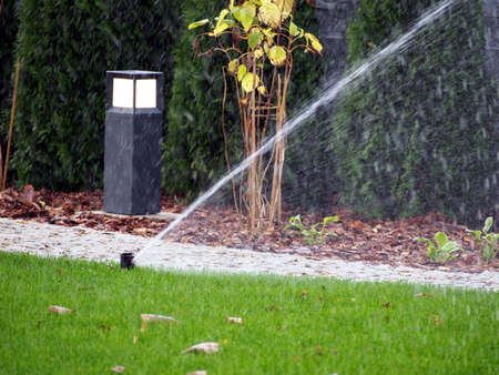 operaia: Garden irrigation - working sprinkler