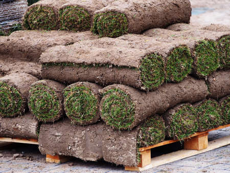Carpet of turf - roll of sod - turf grass roll Stock Photo
