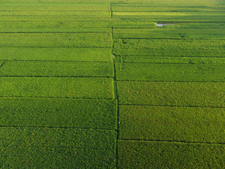 Indonesia rice terraces field Aerial view taken from drone camera. can be used for the promotion of tourist destinations Stock fotó