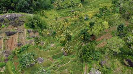 Indonesia rice terraces field Aerial view taken from drone camera. can be used for the promotion of tourist destinations.