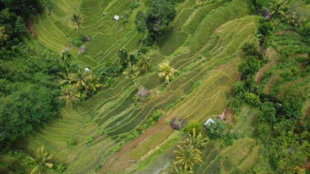 Indonesia rice terraces field Aerial view taken from drone camera. can be used for the promotion of tourist destinations. Stock fotó