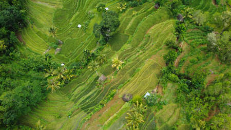 Indonesia rice terraces field Aerial view taken from drone camera. can be used for the promotion of tourist destinations