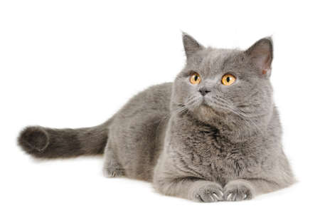 grey haired: cat