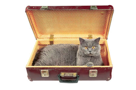 Cat in the old vintage suitcase. Isolated on white. Stock Photo