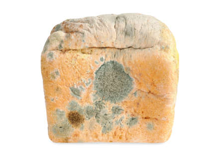One Moldy bread. Isolated on white  background Stock Photo