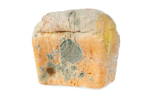 rotten: One Moldy bread. Isolated on white  background Stock Photo