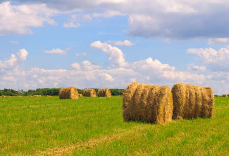 Straw bales on field against blue sky with clouds photo