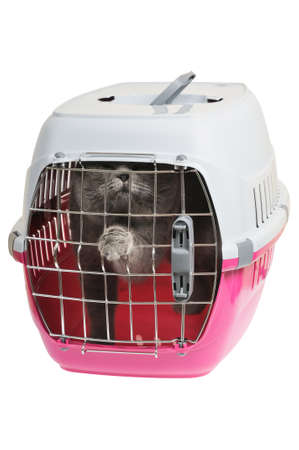 Pet carrier with cat. Isolated on white background.