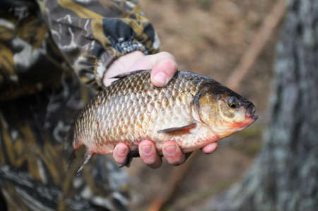 Freshly caught river fish in the hand of fisherman. Stock Photo - 10953136