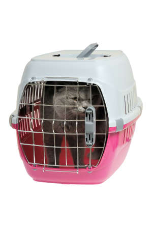 cat carrier: Pet carrier with cat. Isolated on white background.