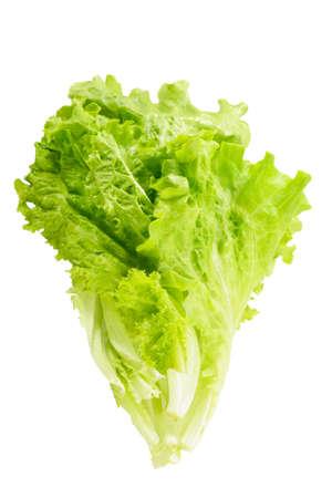 lettuce leaves isolated
