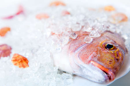 Whole Dorado lays in ice on a white plate with cockleshells close up on a white background photo