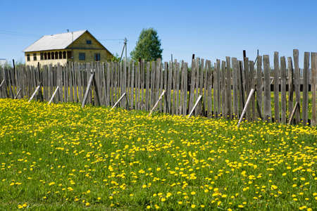 Beautiful rural landscape with a small house, a tree, a wooden fence and a green meadow with yellow flowers in a summer sunny day photo