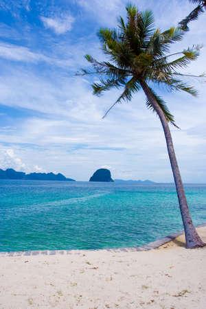 A coconut tree on the beach of Ngai island
